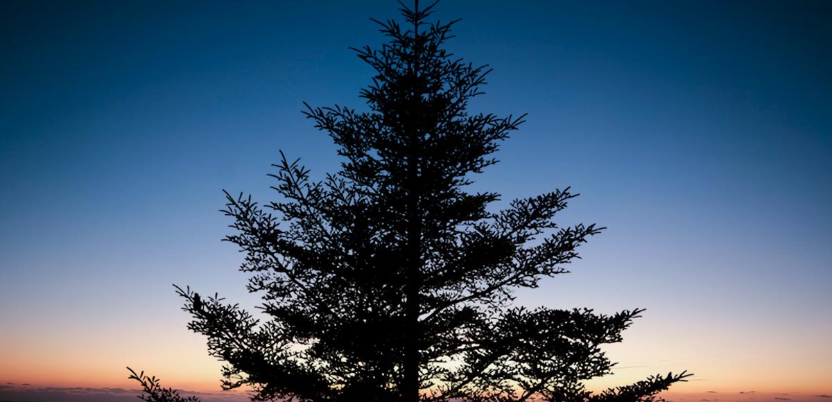 もみの木の魅力イメージ